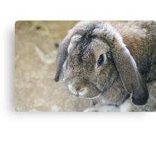 Grumpy Bunny Canvas Print