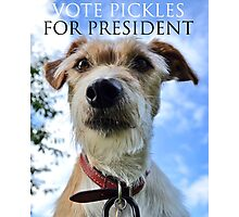 Doggy Elections 2014 Photographic Print