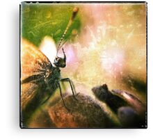 Butterfly Prince Canvas Print