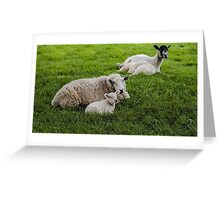 Ewe and Lamb Greeting Card