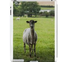 Ewe`s looking iPad Case/Skin