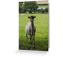 Ewe`s looking Greeting Card