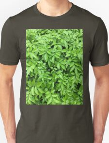 Leaves and dew  Unisex T-Shirt