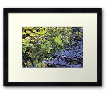 By Any Other Name: Shakespeare Garden, Central Park, NYC Framed Print