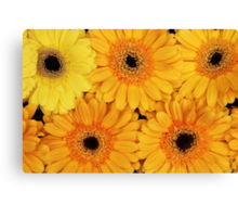 Blooming Gerbera Flowers and Petals - Yellow Canvas Print