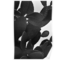 Cactus in BW Poster