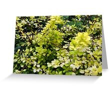 Natural background with yellow green leaves. Greeting Card