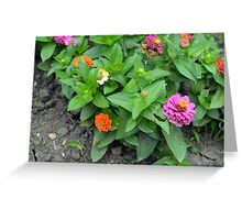 Colorful pink and orange flowers in green leaves bush in the garden. Greeting Card