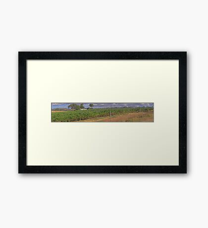 Wine Yard Next To Swan River Upper Swan Framed Print