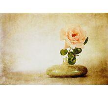 Vintage Rose - JUSTART © Photographic Print