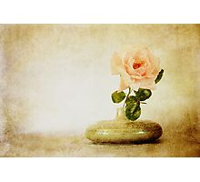 Vintage Rose - JUSTART © Photographic Print