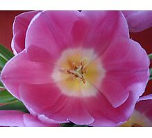 Pretty in Pink Photographic Print