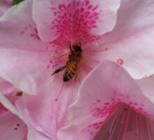 Gorgeous Pink Sticker