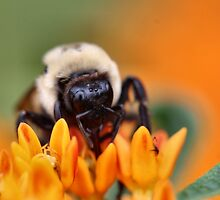 Fuzzy Bee by Keala