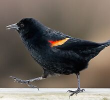 Blackbird Bootcamp by Tom Talbott