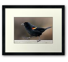 Blackbird Bootcamp Framed Print