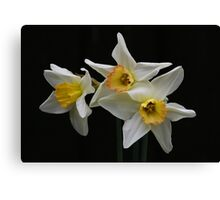 Narcissus (Paperwhite) Canvas Print