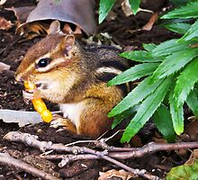 Chipmunk With Cheesy Snack by SRowe Art