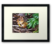 Chipmunk With Cheesy Snack Framed Print