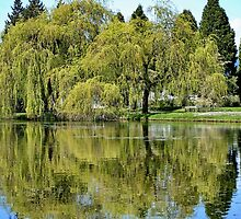 Tree Reflections by AnnDixon
