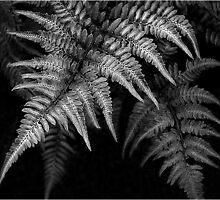 Fern in Black & White by Victoria Jostes