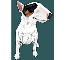 Johnny Cash Bull Terrier  Photographic Print