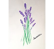 Lavender Bunch Photographic Print