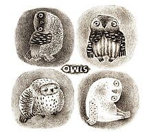 Four cute Owls Photographic Print