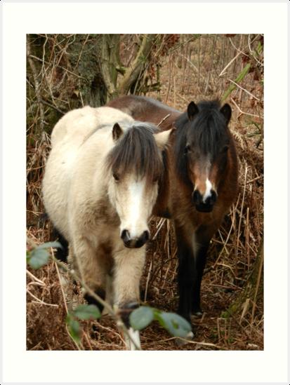 National Trust Ponies by CreativeEm