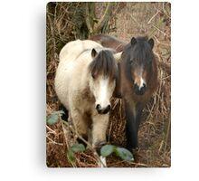 National Trust Ponies Metal Print