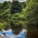 Wetland Habitat by Colin Metcalf