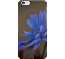 Wild Chicory iPhone Case/Skin
