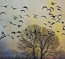 Bird Watching - JUSTART © by JUSTART