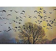 Bird Watching - JUSTART © Photographic Print