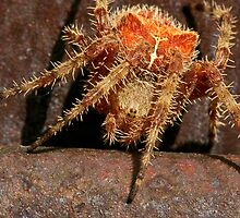 The Cat-Faced Spider by Ken McElroy