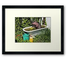 Cooling Off In A Bathtub Framed Print