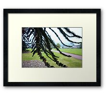 Underneath the Monkey Puzzle Framed Print