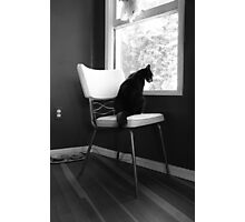 Bored with Cat Food Photographic Print