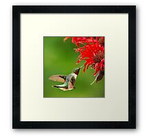 Hummingbird with Red Flower Framed Print