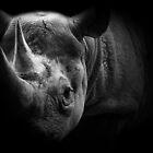 Rhinocerosness by Matt West