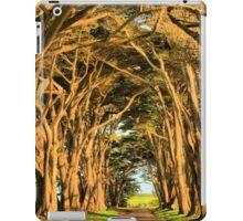 Cypress Lined Road iPad Case/Skin