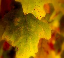 LEAVES     ^ by ctheworld