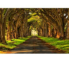 Cypress Tunnel Afternoon Glow Photographic Print