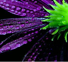 Purplicious Photographic Print