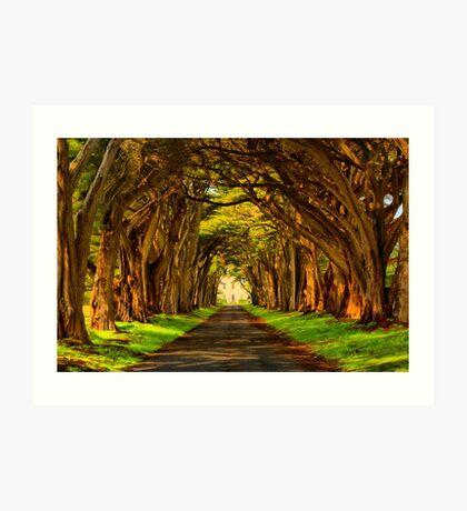 Cypress Golden Glow Art Print