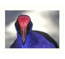 Purple Swamphen portrait, Port Douglas, Queensland, Australia Art Print