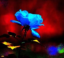 The Blue Rose by michel bazinet