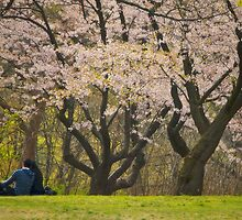 Blossoming Young Love Under the Cherry Blossoms by Gerda Grice