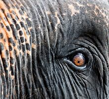 Close-up shot of Asian elephant eye by Stanciuc