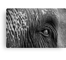 Close-up shot of Asian elephant eye Canvas Print